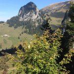 Adopt an Alp: Tompey L'Etivaz AOP